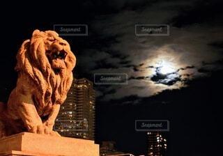 月とライオンの写真・画像素材[3933217]