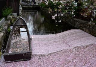 京都 高瀬川の春①の写真・画像素材[4326120]