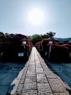 霧島ツツジと太陽の写真・画像素材[4417874]