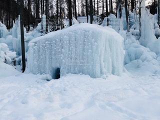 氷点下の森の写真・画像素材[2812854]