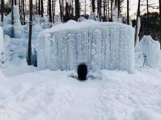 氷点下の森の写真・画像素材[2812856]