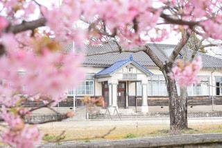 桜と学校の写真・画像素材[3000299]