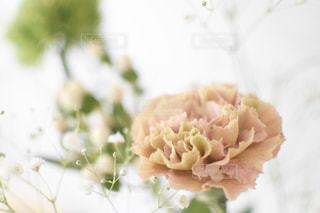 花のクローズアップの写真・画像素材[3194672]