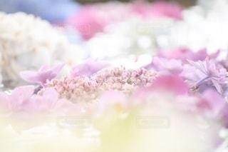 花のクローズアップの写真・画像素材[3336631]