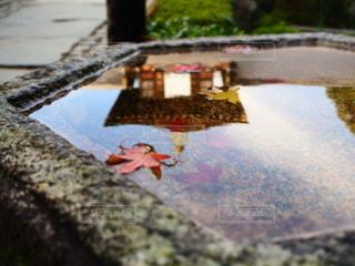 秋の京都の写真・画像素材[3343380]