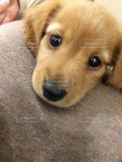 帽子をかぶった犬の写真・画像素材[3360213]