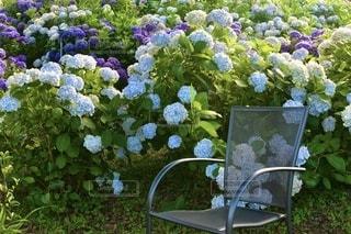 花園のクローズアップの写真・画像素材[3375220]