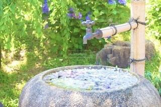 花園のクローズアップの写真・画像素材[3375231]