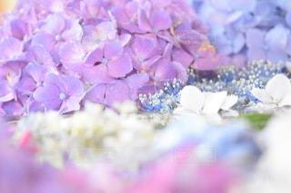 花のクローズアップの写真・画像素材[3375242]