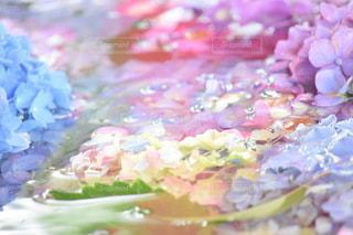 花のクローズアップの写真・画像素材[3375249]