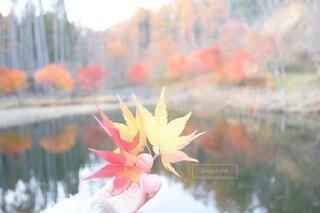 花のぼやけたイメージの写真・画像素材[3712514]