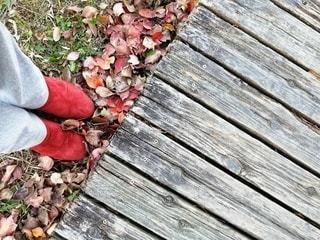 落ち葉と木の道のクローズアップの写真・画像素材[2869883]