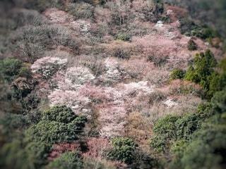 自然,風景,花,桜,森林,屋外,ピンク,山,サクラ,草,新緑,ポートレート,草木,ブロッサム