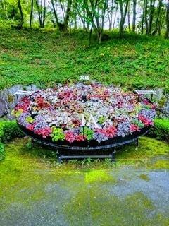 花園のクローズアップの写真・画像素材[3050313]