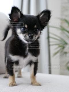 犬の写真・画像素材[2756453]