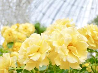 花をクローズアップするの写真・画像素材[2777164]