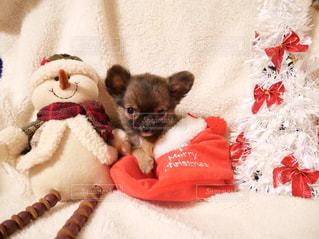 はじめてのクリスマスの写真・画像素材[2855889]