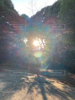 空,屋外,太陽,光,樹木