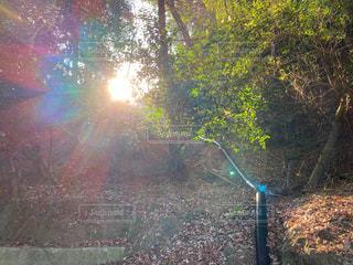 自然,空,森林,太陽,花火,光,樹木,木立
