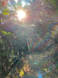 自然,空,森林,太陽,光,樹木,参拝