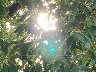 空,屋外,太陽,日光,光,樹木,草木
