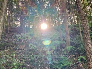 森林浴の中で お日様🌞に温められ♡の写真・画像素材[2882032]