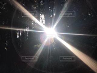 空,太陽,散歩,光,木々,明るい,景観,井伊谷城跡
