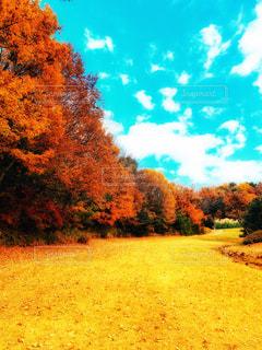 秋の散歩道の写真・画像素材[2829024]