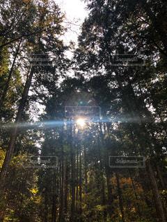 自然,空,秋,森林,屋外,太陽,日光,光,樹木,岐阜県,恵那