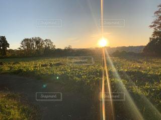 自然,風景,空,夕日,屋外,太陽,草原,日光,田舎,光,草,樹木,景観,草木,日中