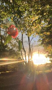 風景,空,花,木,屋外,太陽,光,樹木,写真,明るい,草木