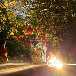 風景,空,秋,屋外,太陽,葉っぱ,葉,光,落ち葉,樹木,写真,明るい,草木