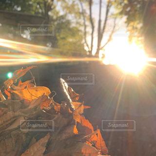 空,木,屋外,太陽,葉っぱ,葉,光,草,落ち葉