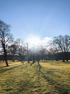 自然,空,公園,太陽,景色,光,樹木,草木,日中