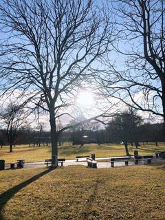 風景,空,公園,太陽,晴れ,景色,光,樹木,草木,日中