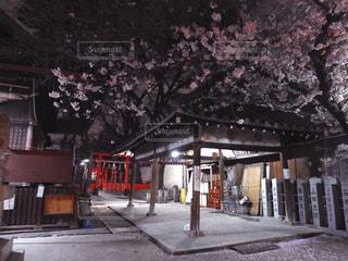 花,春,桜,木,神社,花見,夜桜,樹木,お花見,イベント