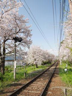 空,花,春,桜,木,屋外,花見,草,樹木,お花見,イベント,鉄道,草木,さくら,ブロッサム