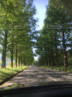 森林道路の眺めの写真・画像素材[3212569]