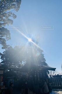空,木,太陽,森,青空,光,眩しい