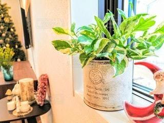 窓際の観葉植物の写真・画像素材[2778116]