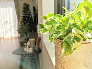 窓際の観葉植物🌿の写真・画像素材[2778514]