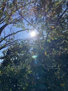 自然,空,屋外,太陽,光,樹木,日中