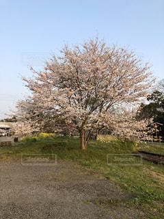 男性,風景,春