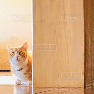 大黒柱と猫の写真・画像素材[2807464]