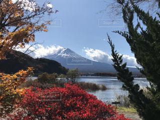 富士山を背景にした紅葉の写真・画像素材[2813422]