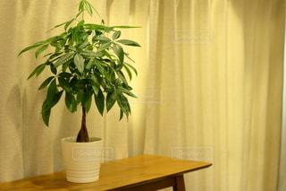テーブルと観葉植物の写真・画像素材[2927228]