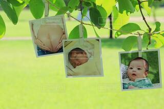 育児の思い出の写真・画像素材[3618897]