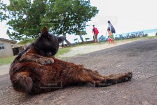 猫,動物,景色,ペット,人物,リラックス,野良猫,ネコ
