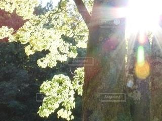 自然,空,木,太陽,森,光,樹木