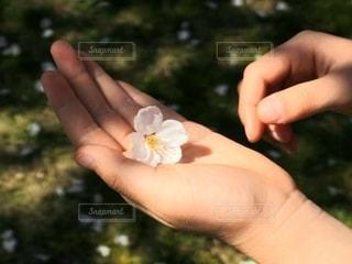 花を持つ手の写真・画像素材[2923987]